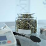 A New High: Cannabis Strains At GreenMagics